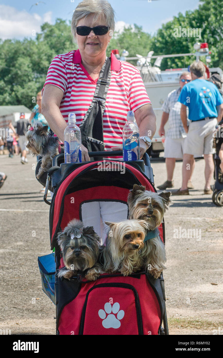 A woman carries her three Yorkshire terriers to the 66th annual Blessing of the Fleet in Bayou La Batre, Alabama, May 3, 2015. - Stock Image