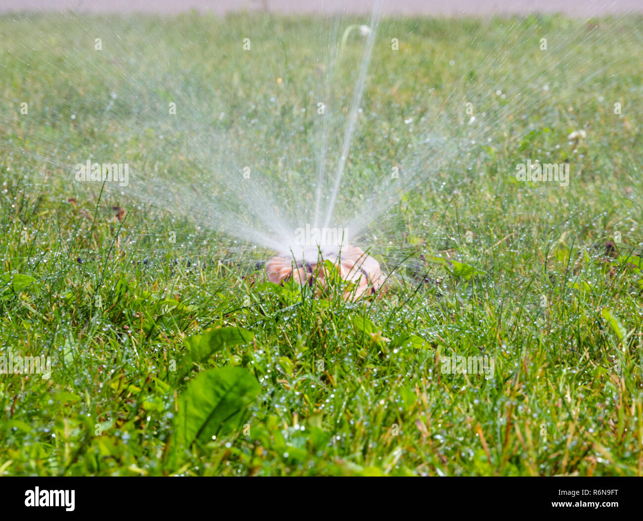 Sprinkler sprinkler system of the park in working condition - Stock Image