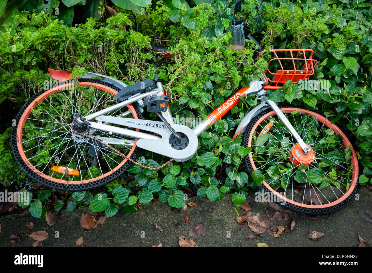 29.11.2018, Singapore, Republic of Singapore, Asia - A broken rental bike from the provider Mobike is lying on the ground next to a sidewalk. - Stock Image