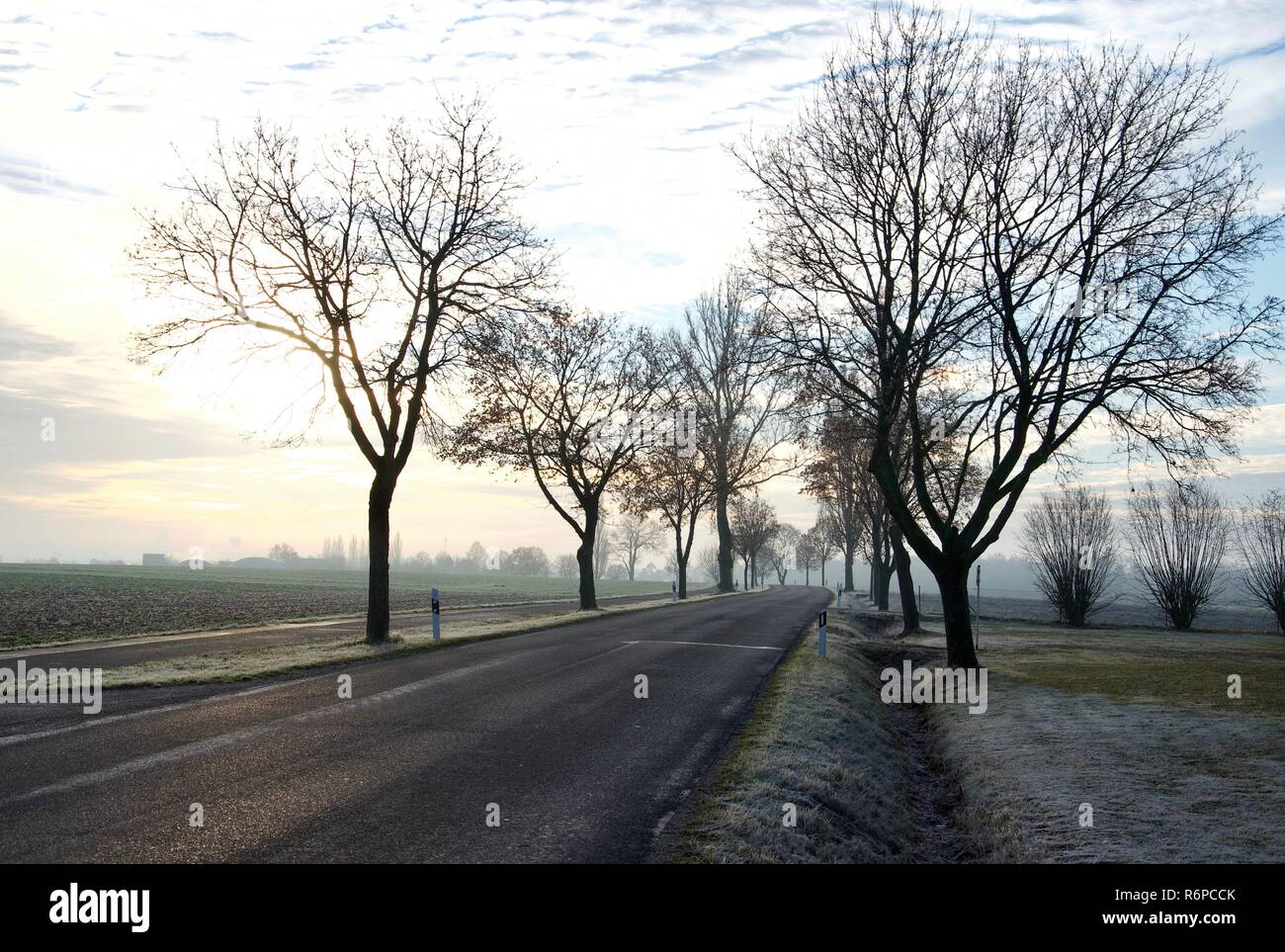 A frosty morning after sunrise in the countryside of Bavaria in Germany, slippery road, trees next to the street, winter - Stock Image