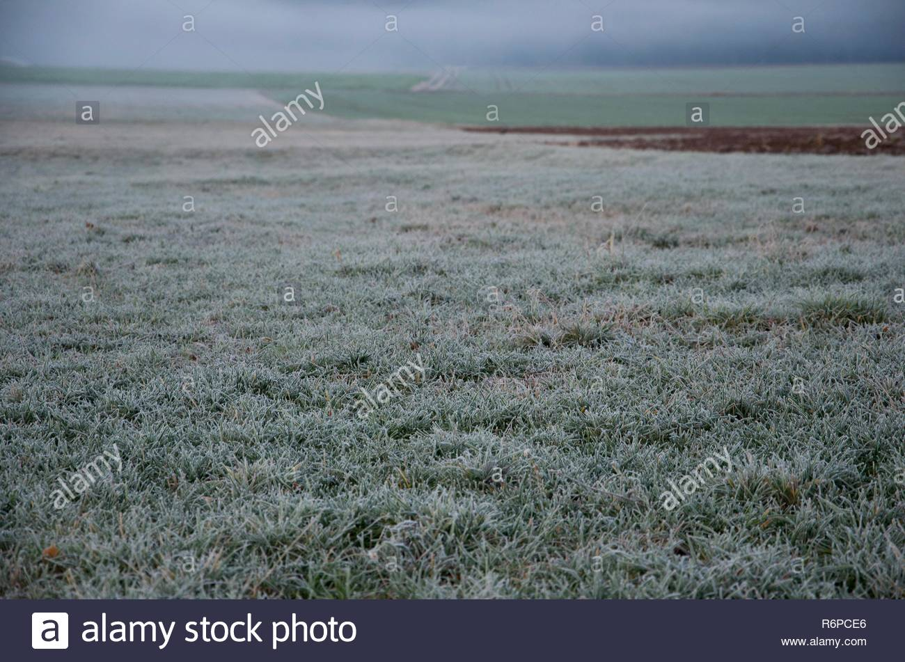A frosty morning after sunrise in the countryside of Bavaria in Germany, rime on the fields, a black bird in the middle - Stock Image
