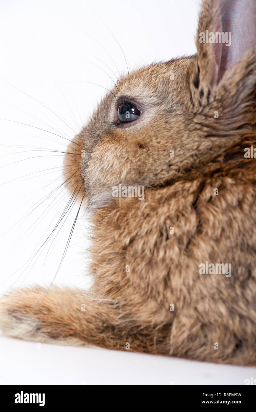 Cute little bunny - Stock Image