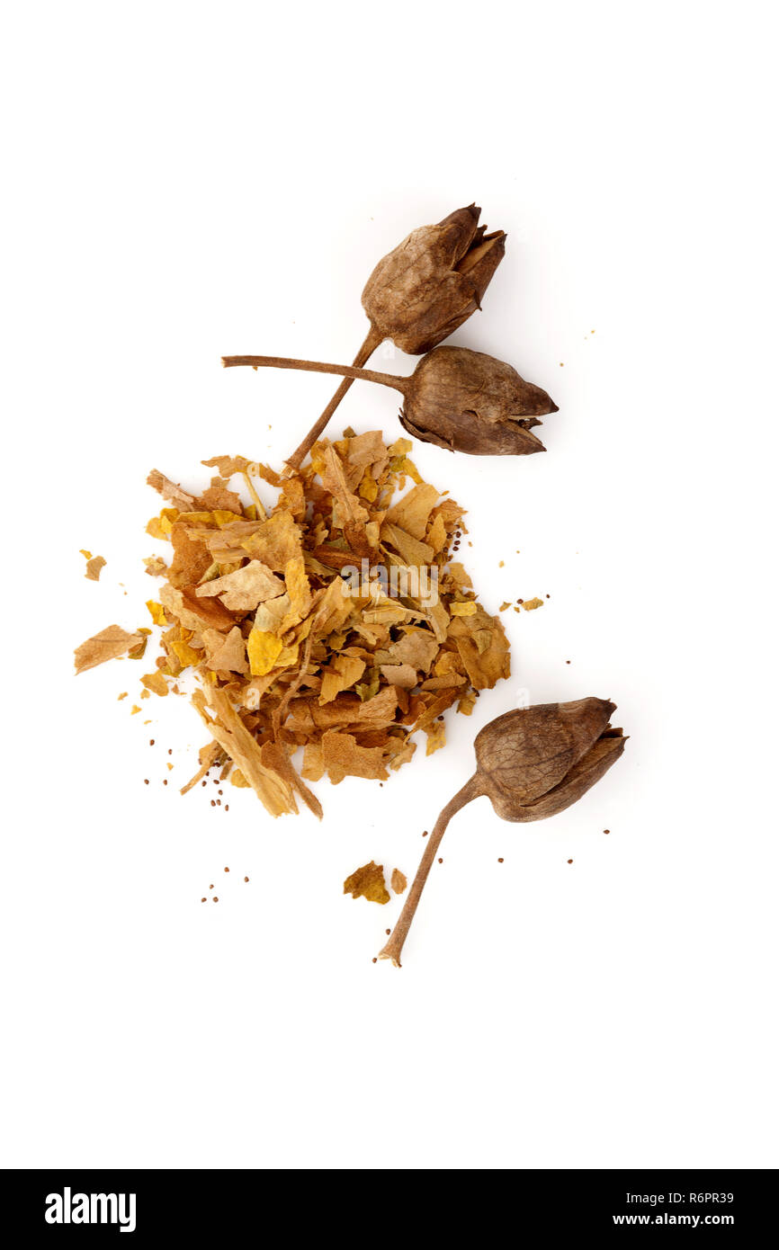 Crushed and dried tobacco leaves with seeds - Stock Image