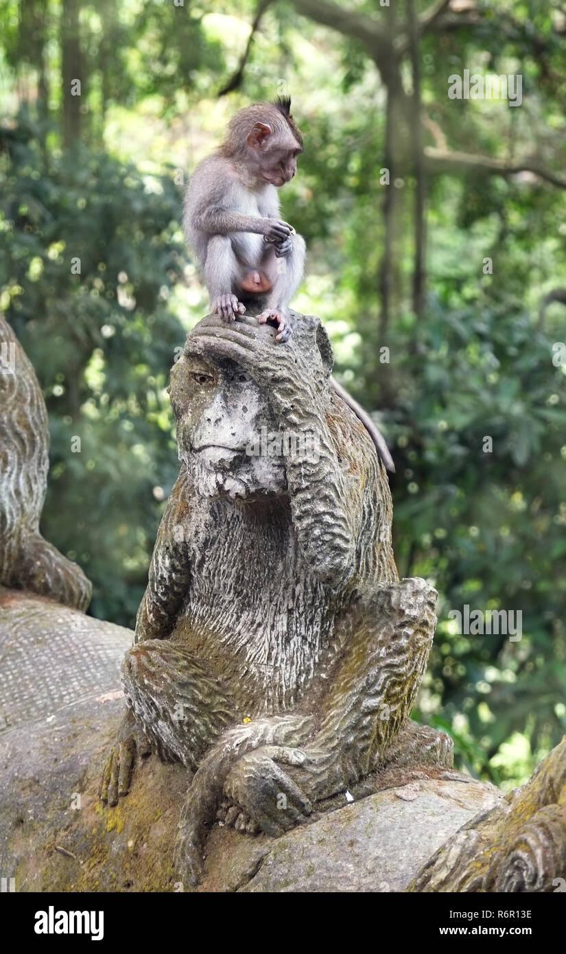Monkey forest, Ubud - Stock Image