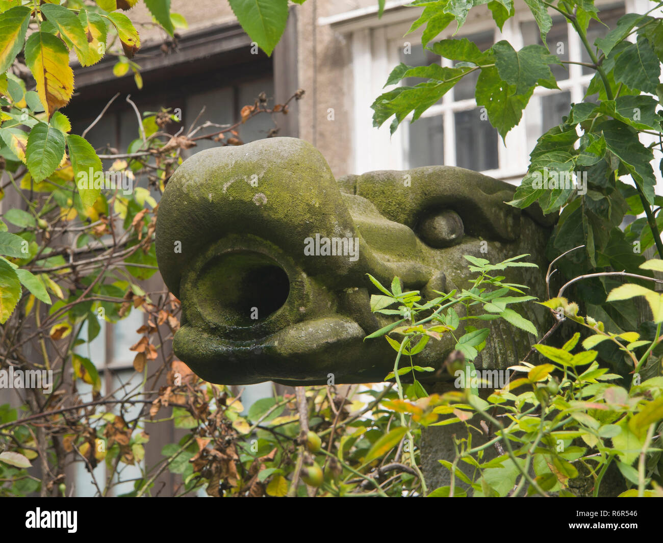 Picturesque old and mossy drainage spout, mythical animal, adoring house facade in the centre of Gdansk Poland - Stock Image