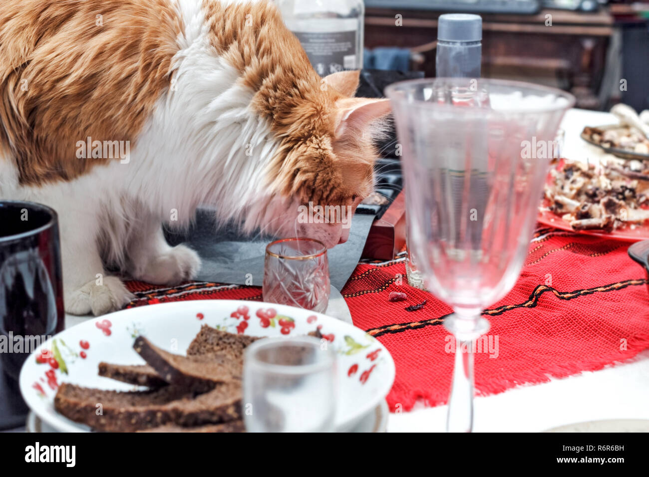 Adult red pretty cat on table with mess after celebration in room - Stock Image