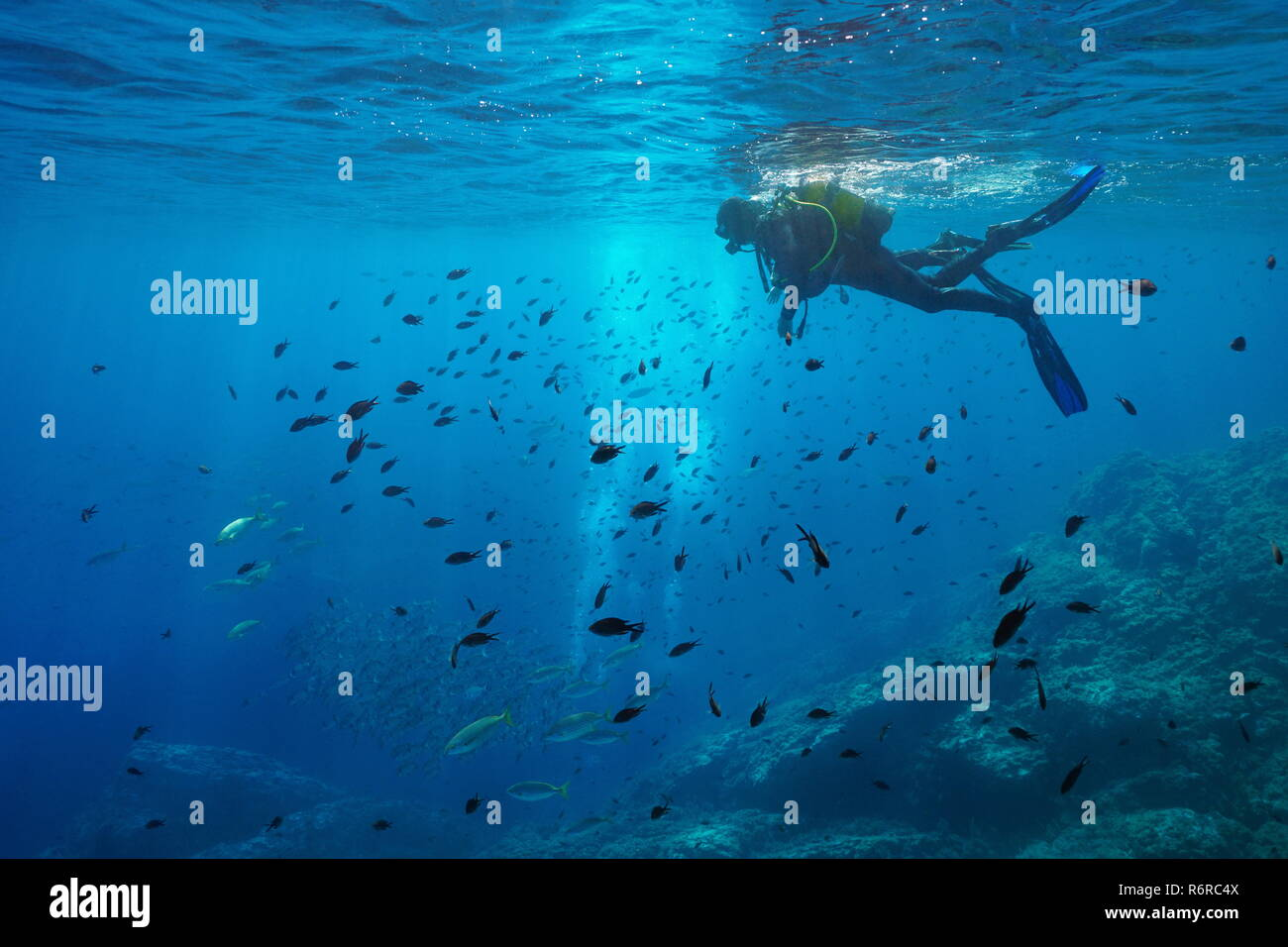 Scuba diver on water surface look at shoal of fish underwater, Mediterranean sea, Medes Islands, Costa Brava, Spain - Stock Image