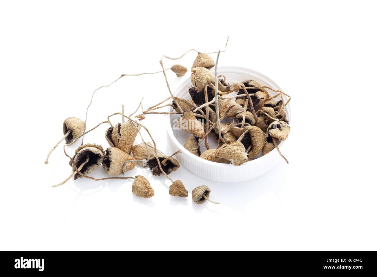 Dried Psilocybin Mushrooms Stock Photos & Dried Psilocybin