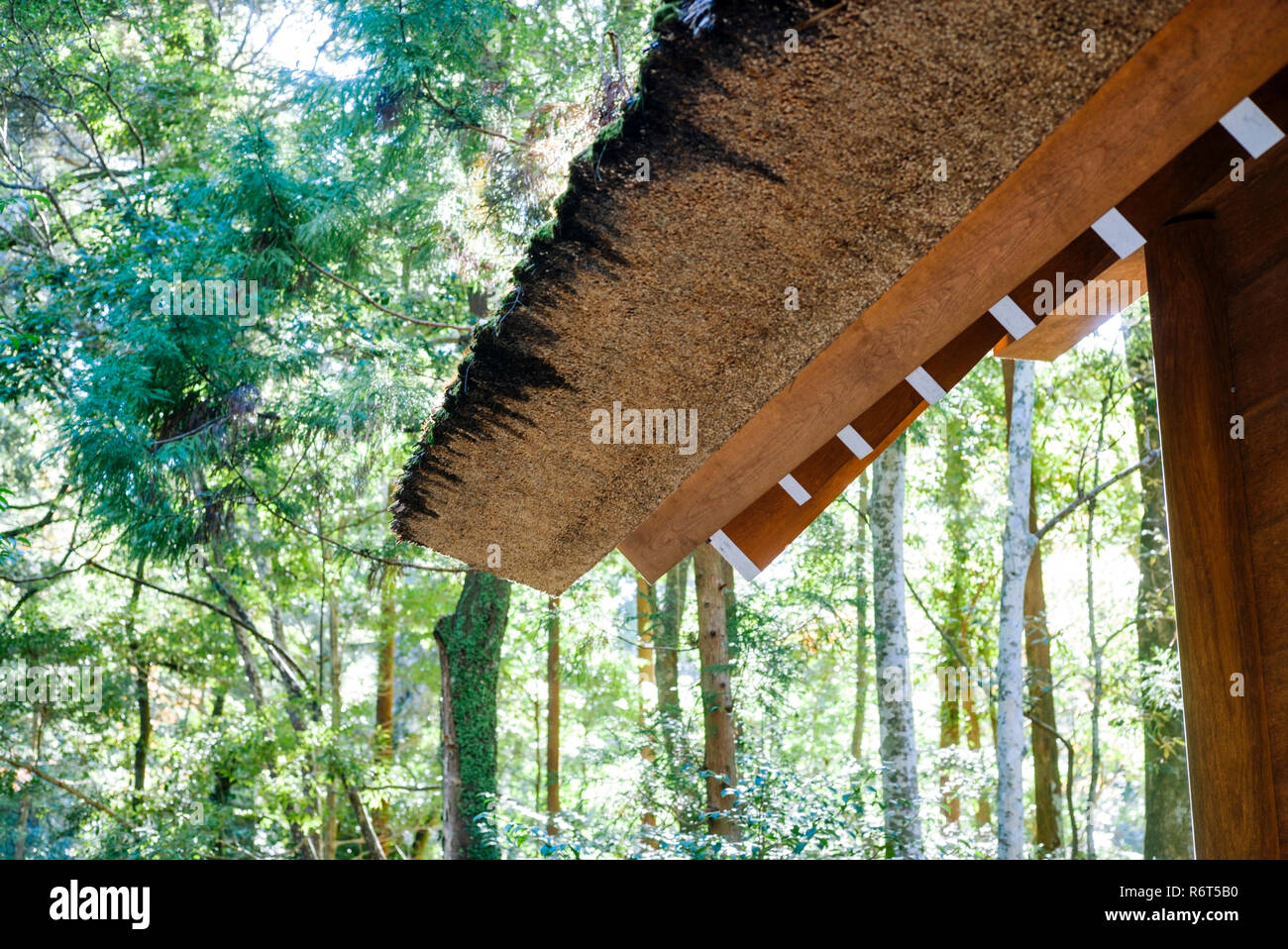 Ise Grand Shrine, Mie Prefecture, Japan: Roof detail, Inner Shrine (Naiku) compound - Stock Image