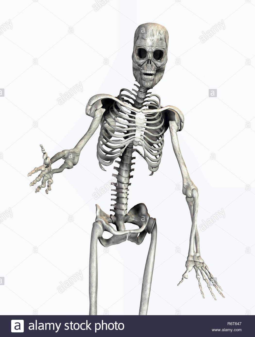 Funny Skeletons Stock Photos Funny Skeletons Stock Images Alamy