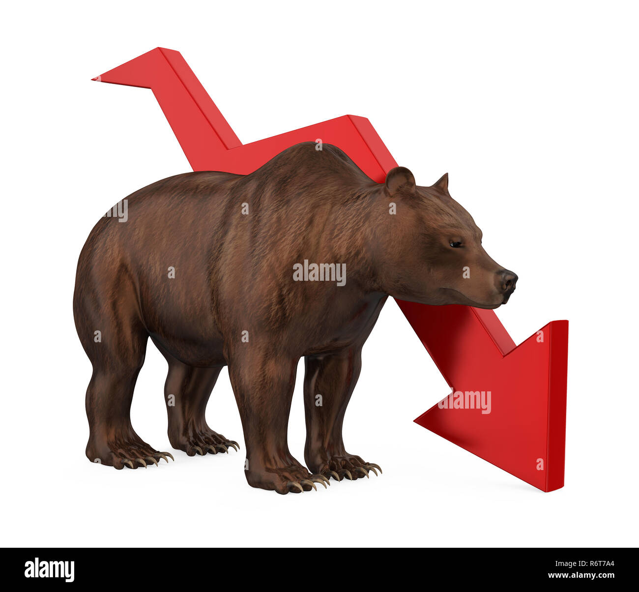 Bear with Arrow Down Isolated - Stock Image