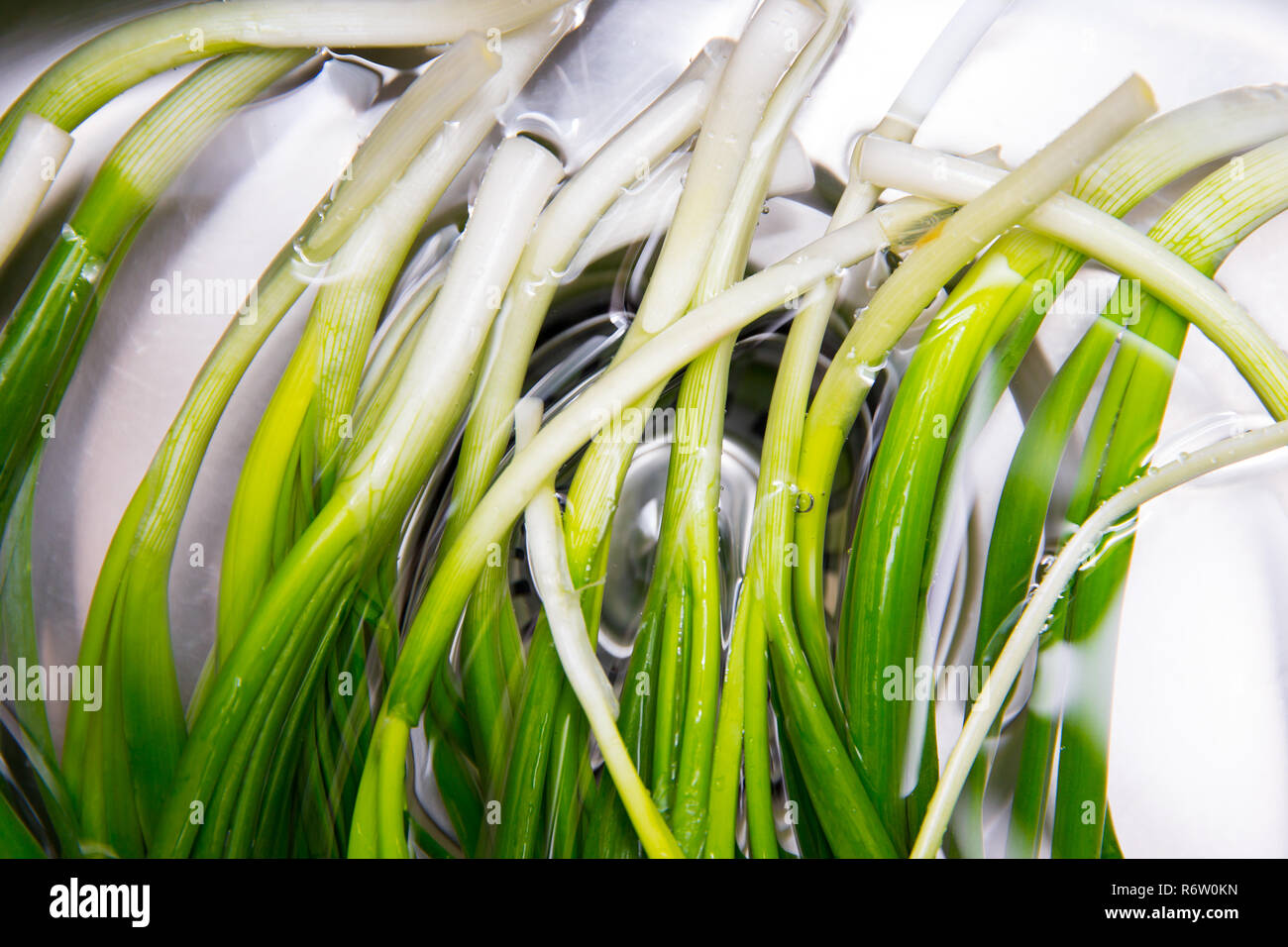 Purified Winter Onion - Stock Image