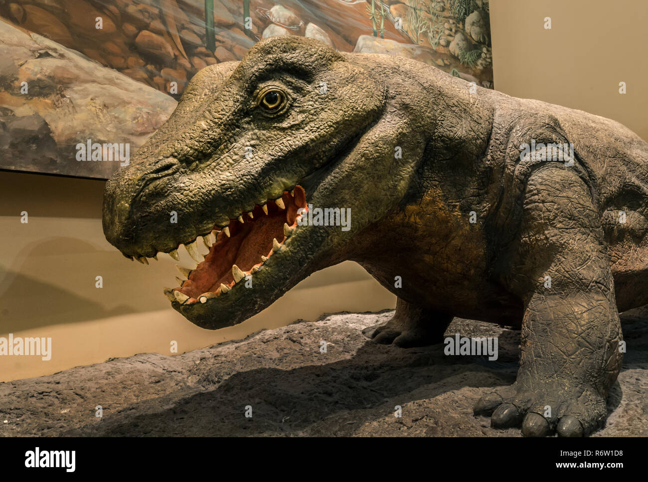 A dinosaur is displayed in the dinosaur gallery at Fernbank Museum of Natural History, May 23, 2014, in Atlanta, Georgia. - Stock Image