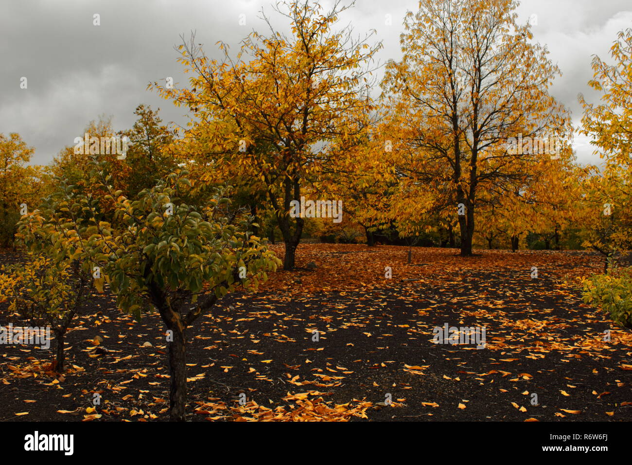 Paisaje de otoño.  autumn landscape - Stock Image