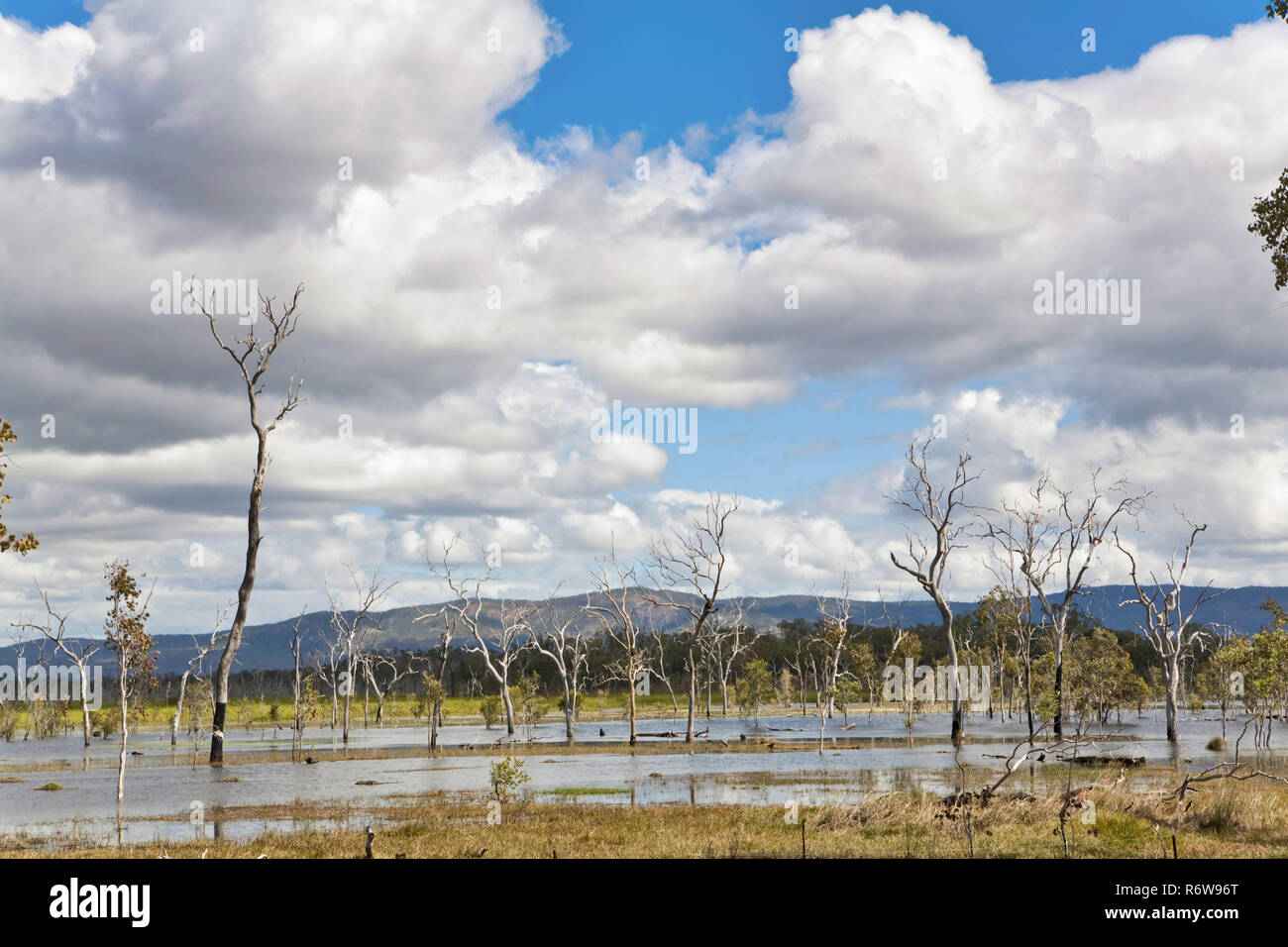 Trees that have died due to flooding, Cairns, Queensland, Australia. - Stock Image
