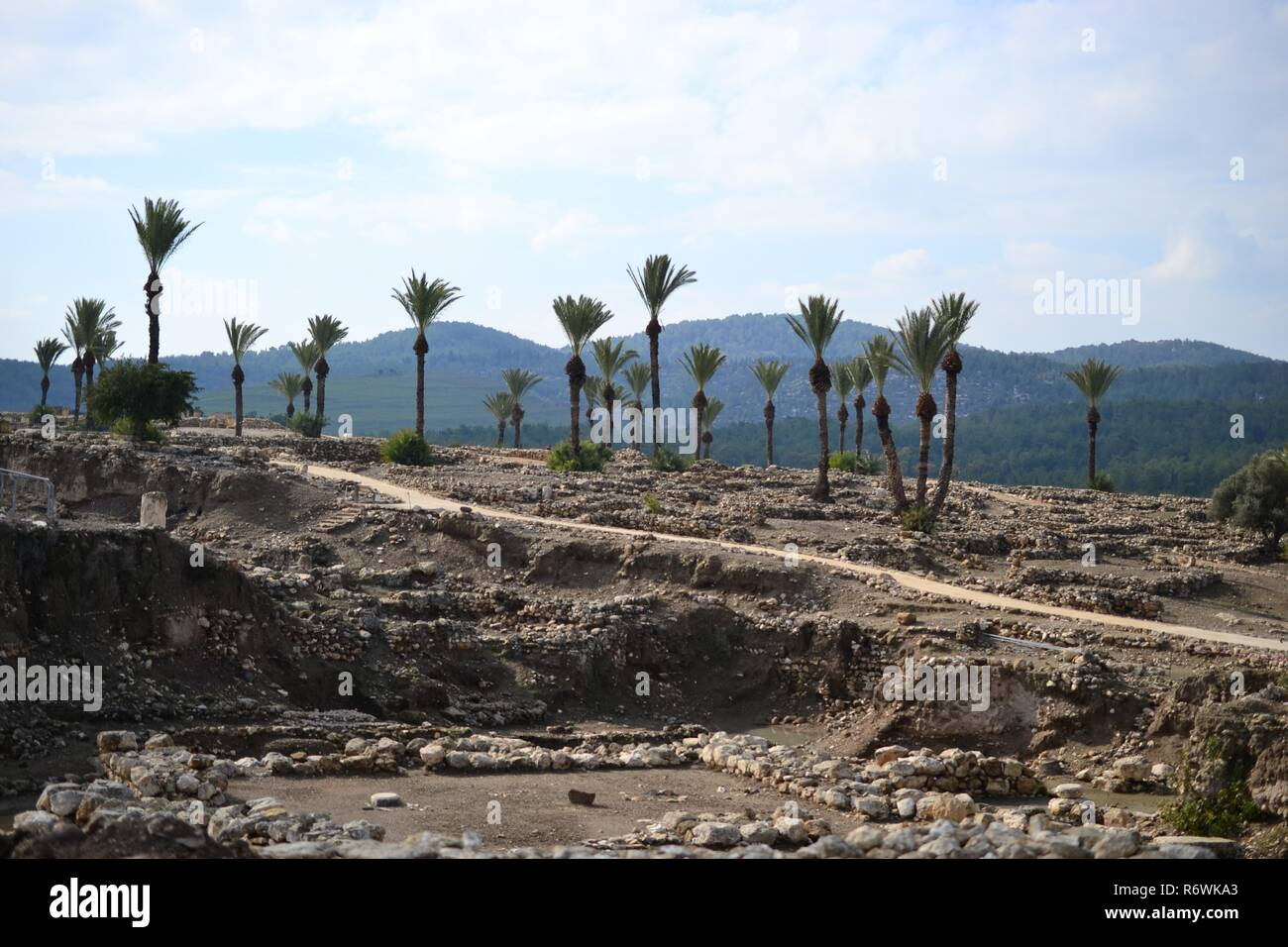 Palm trees in antique Megiddo Armageddon Archaeological site, Jezreel Valley, Lower Galilee, Israel - Stock Image