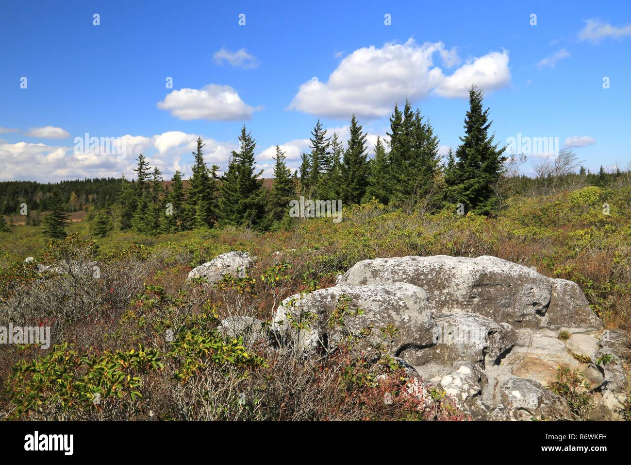 Dolly Sods National Wilderness Area - Stock Image