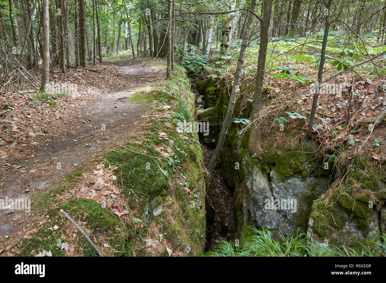 A large crevice in a forest caused by the collapse of a nearby sinkhole in Mystery Valley Karst Preserve, Northern Michigan - Stock Image