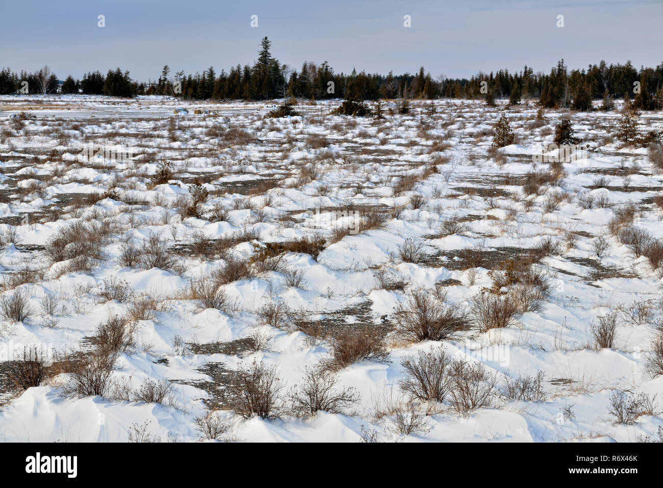 Vegetation on limestone pavements of Goat Island in early winter, near Little Current, Manitoulin Island, Ontario, Canada - Stock Image