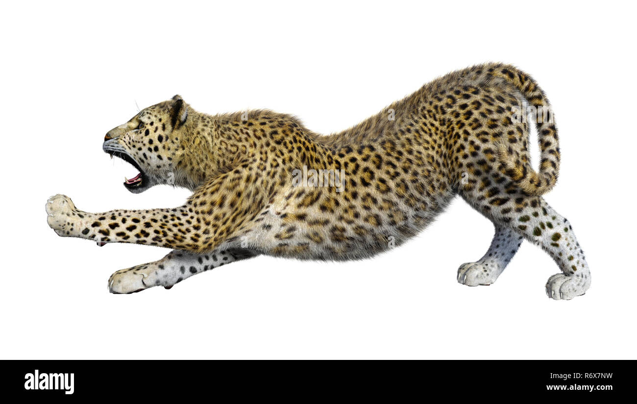 3D Rendering Big Cat Leopard on White Stock Photo