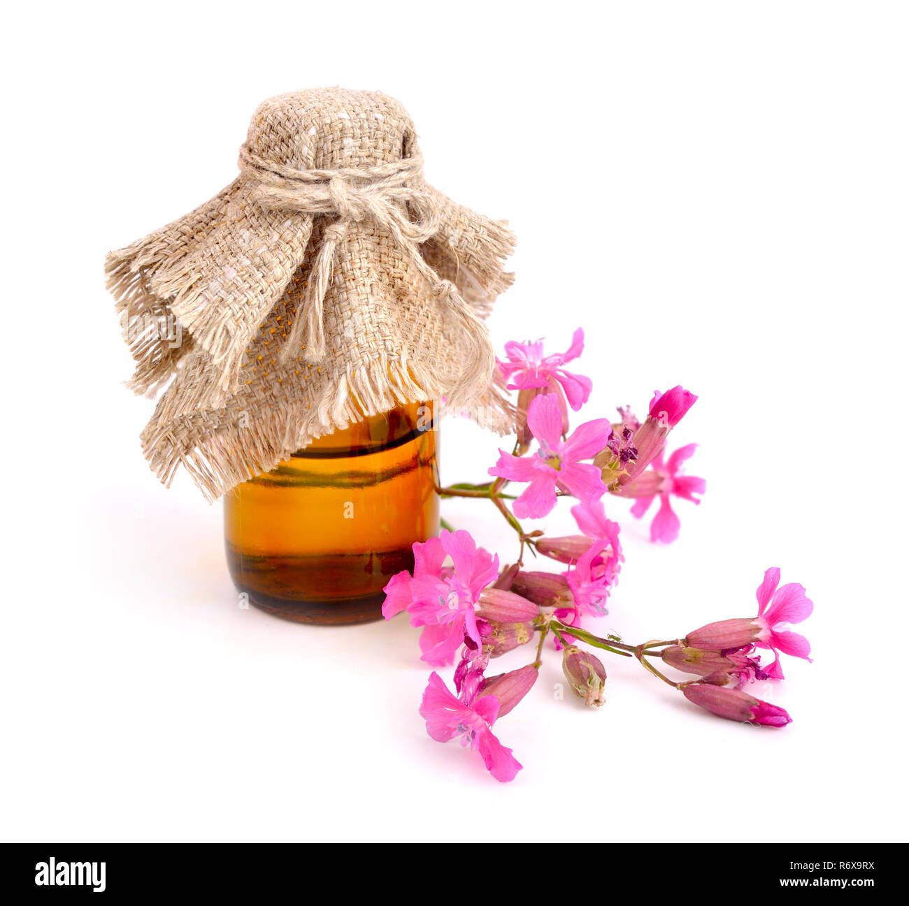 Dianthus deltoides (maiden pink) with pharmaceutical bottle. Stock Photo