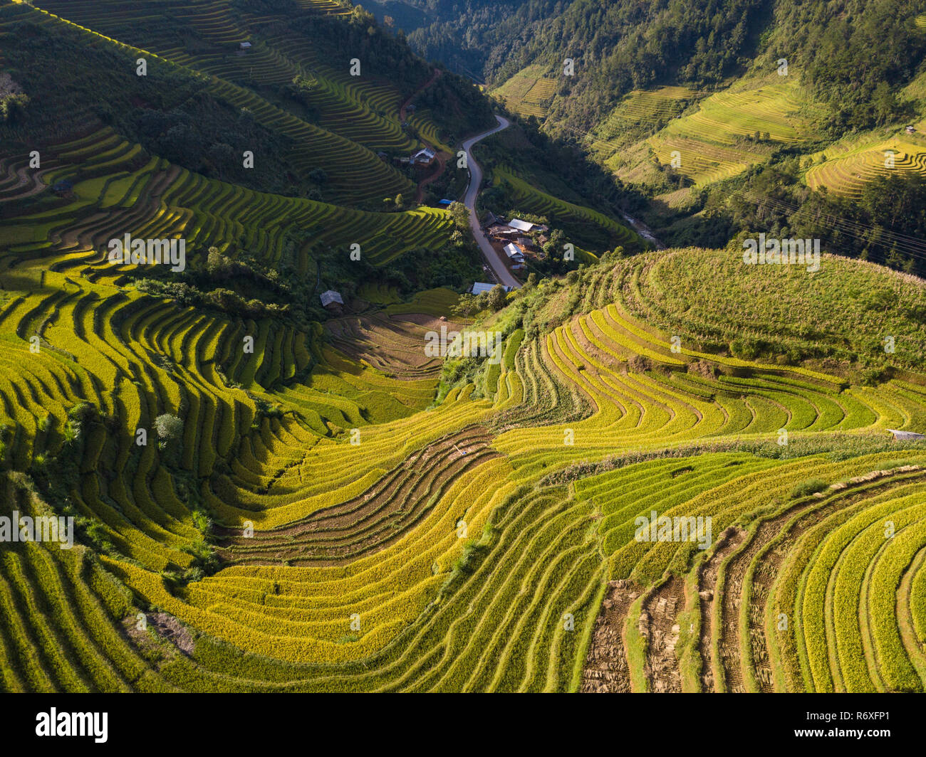 Rice Fields On Terraced Thailand Stock Photos  U0026 Rice