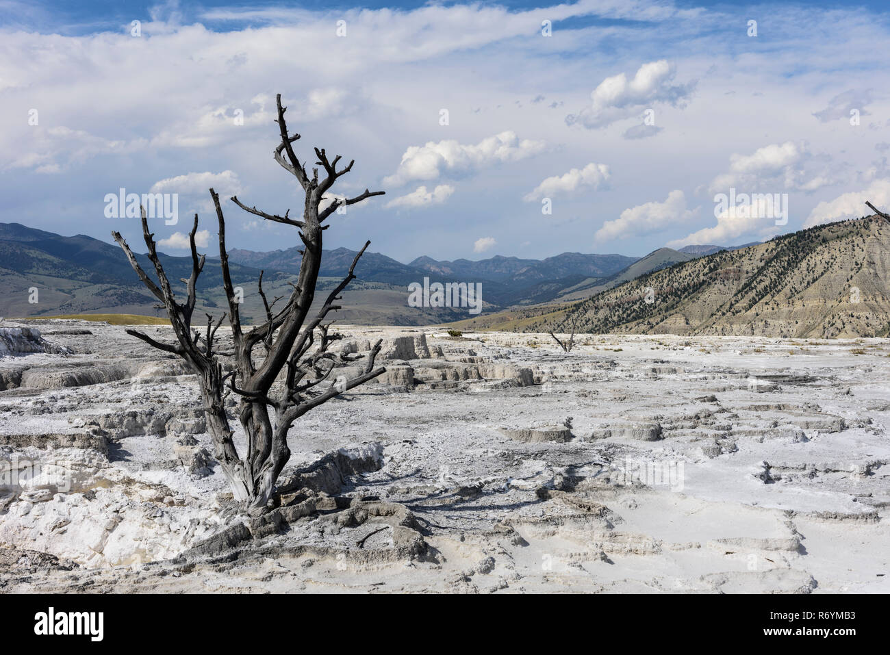 Brutal nature at Yellowstone National Park - Stock Image