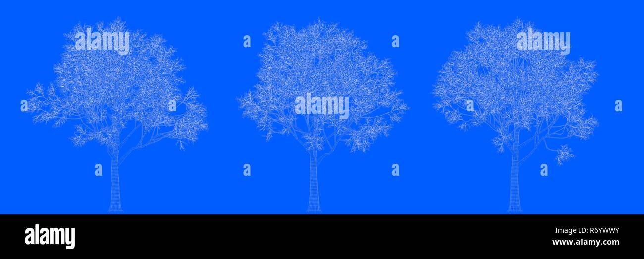 3d rendering of three trees as lines on a blue background Stock Photo