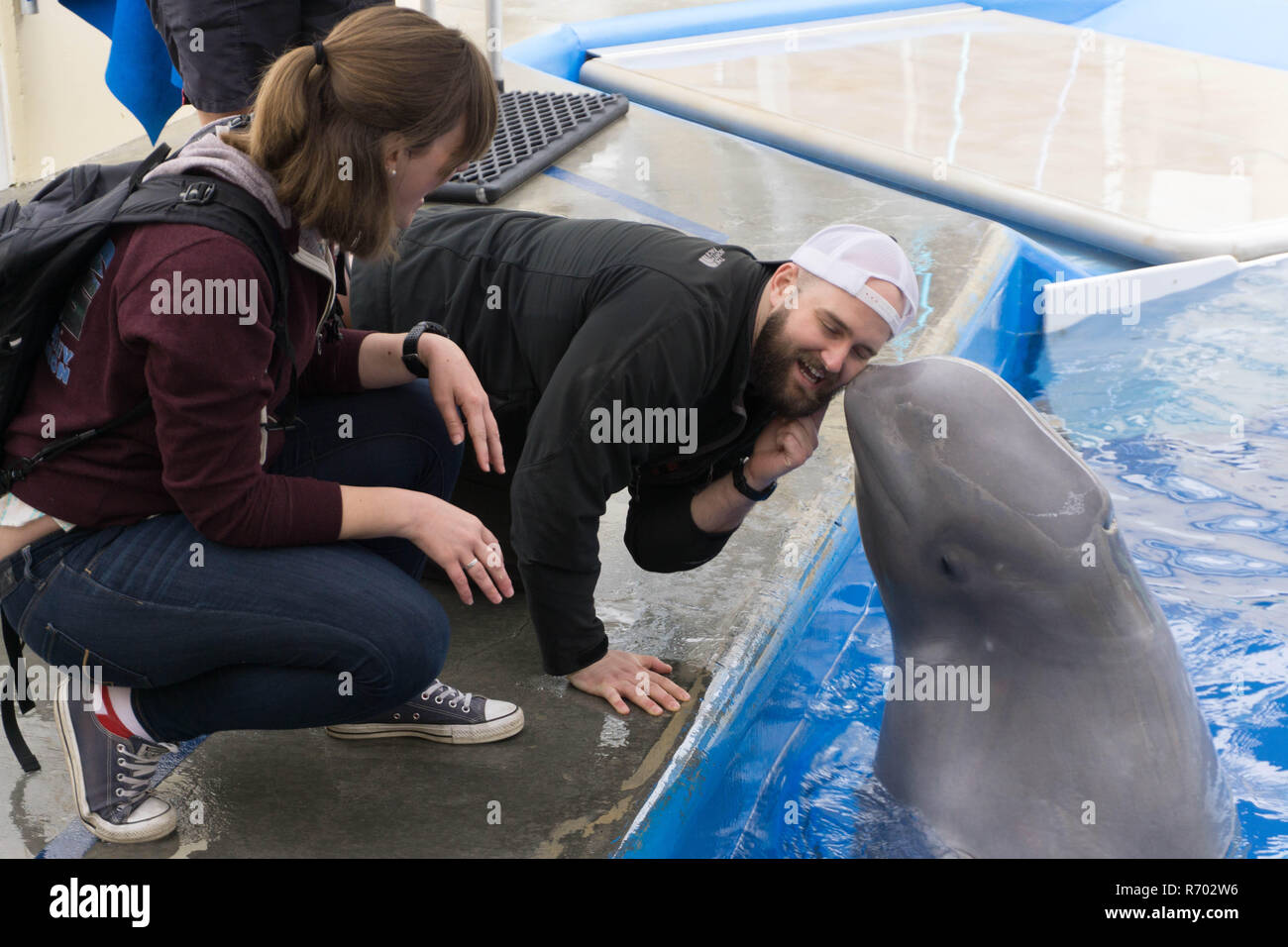 Getting kissed by a whale at Seaworld in San Diego - Stock Image
