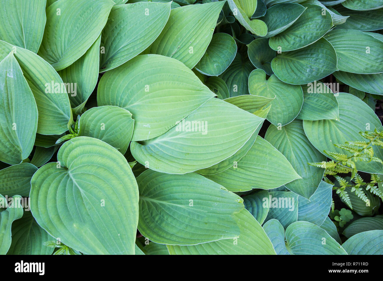 Creative layout made of green leaves. Flat lay. Nature concept Stock Photo