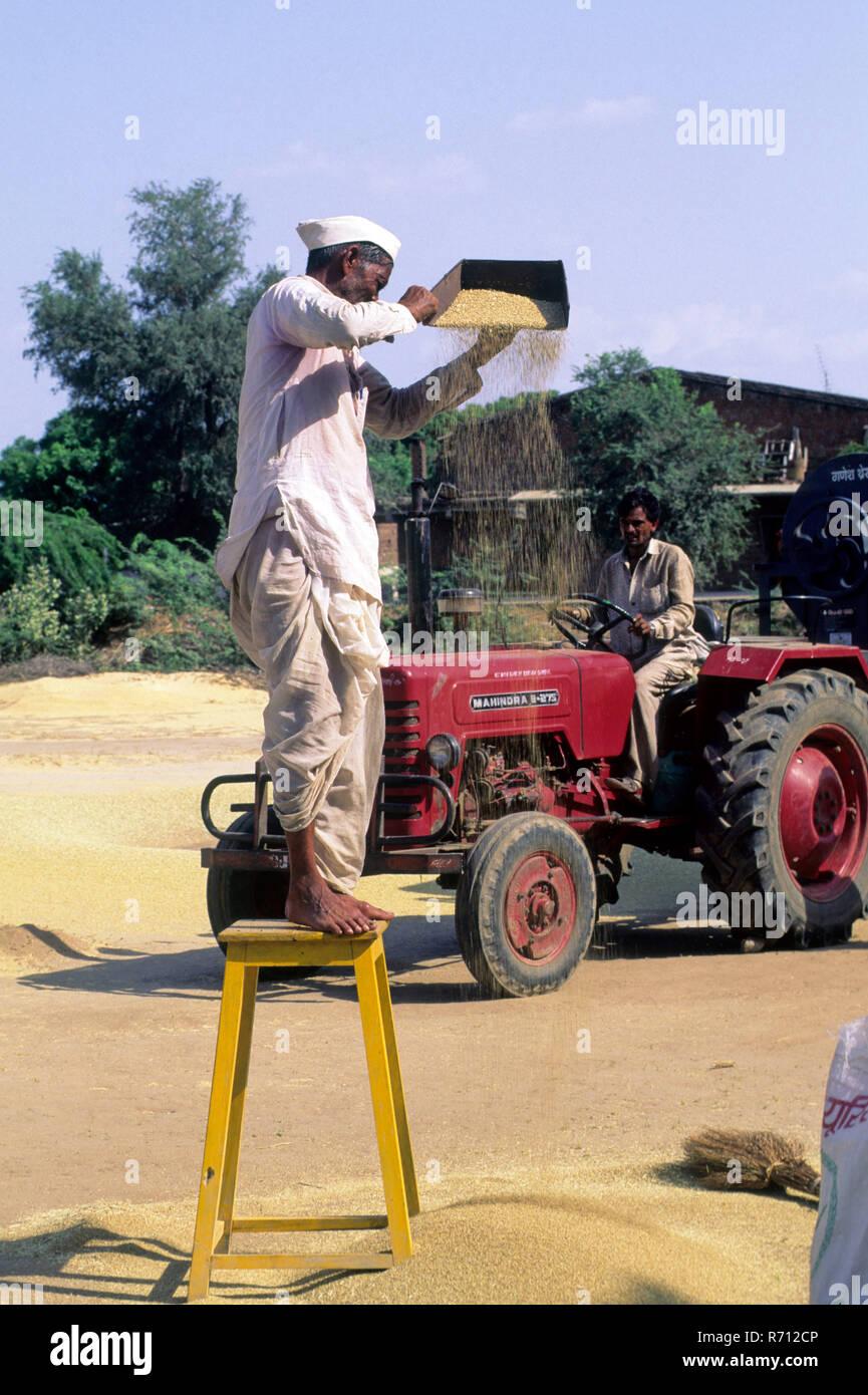 Man Men threshing bajra, Modhera, Gujarat, India - Stock Image