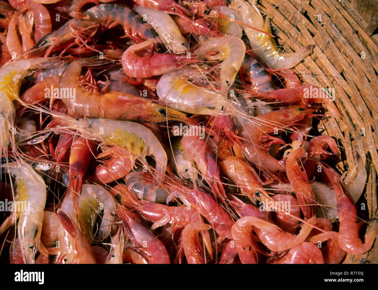 Non Vegetarian Food Fresh Prawns Red And White Sea Food Stock Photo Alamy