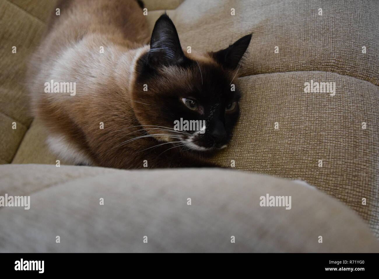 Sleepy Cat - Stock Image