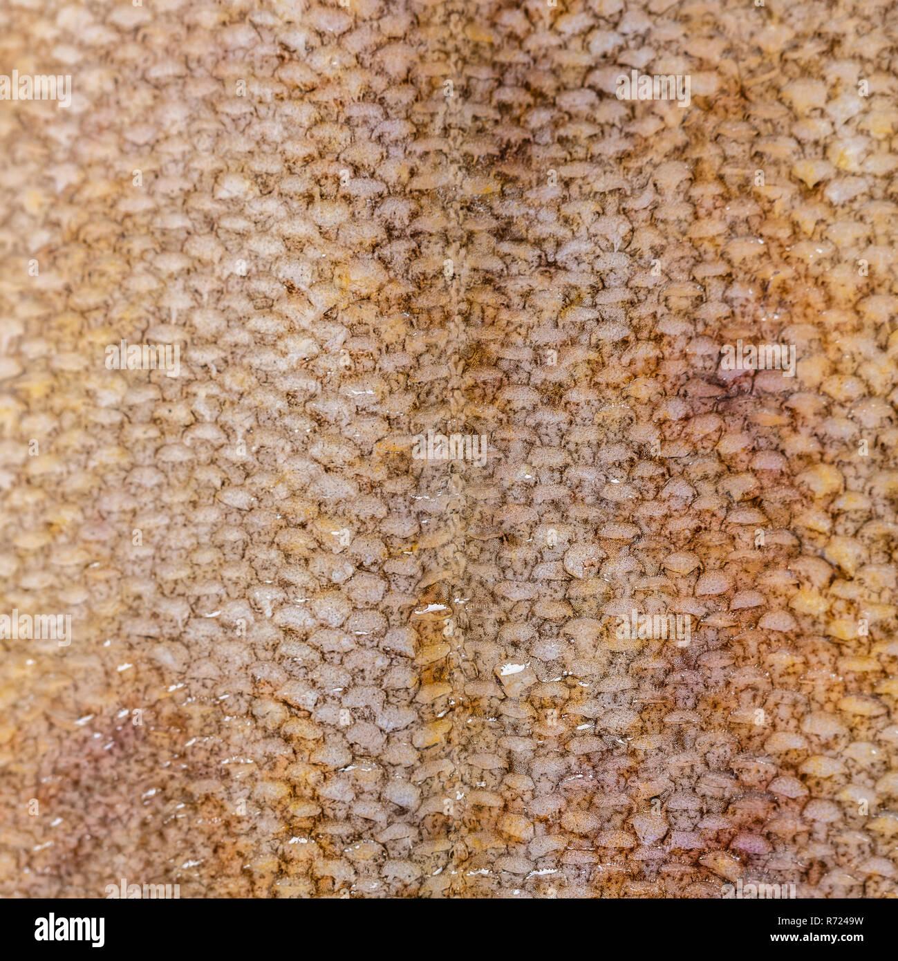 food background, flounder fish scales texture closeup - Stock Image