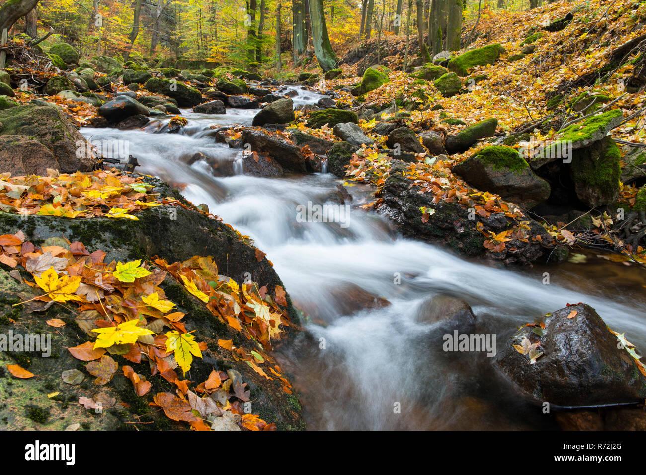 Bergbach, Fluss Ilse, Ilsenburg, Nationalpark Harz, Sachsen-Anhalt, Deutschland - Stock Image