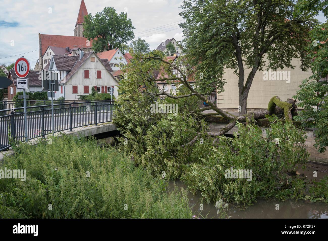storm broken chestnut tree, rosengarten-rieden, bibers river, Hohenlohe region, Baden-Wuerttemberg, Heilbronn-Franconia, Germany, (Aesculus) - Stock Image