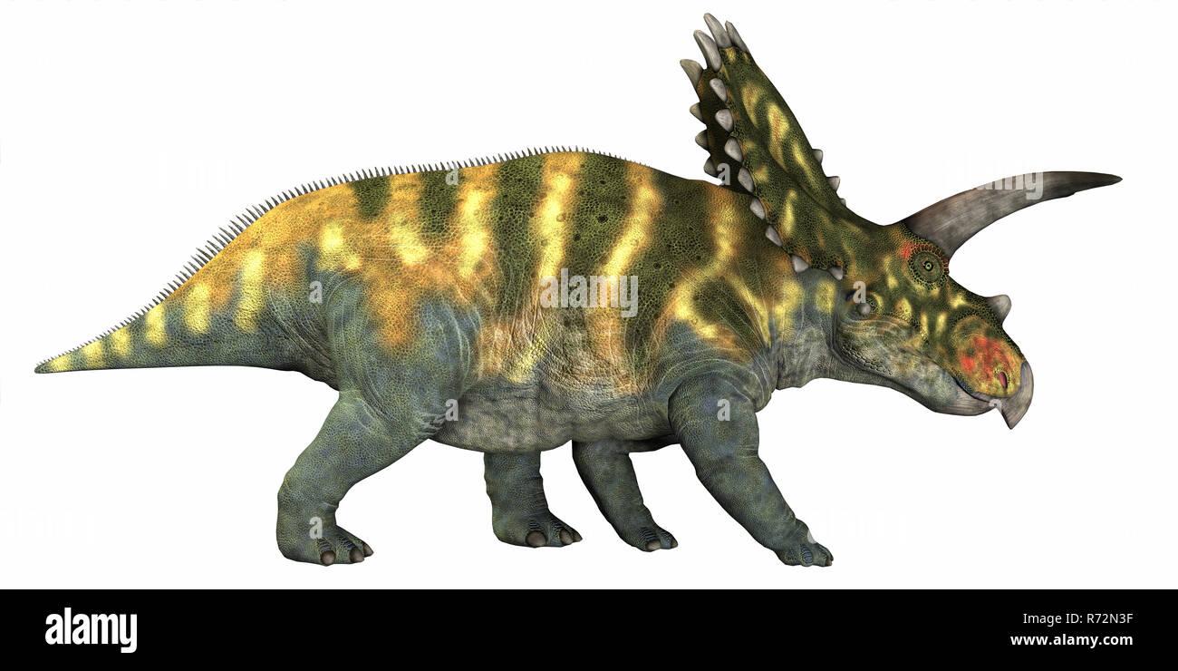 Coahuilaceratops on White - Stock Image