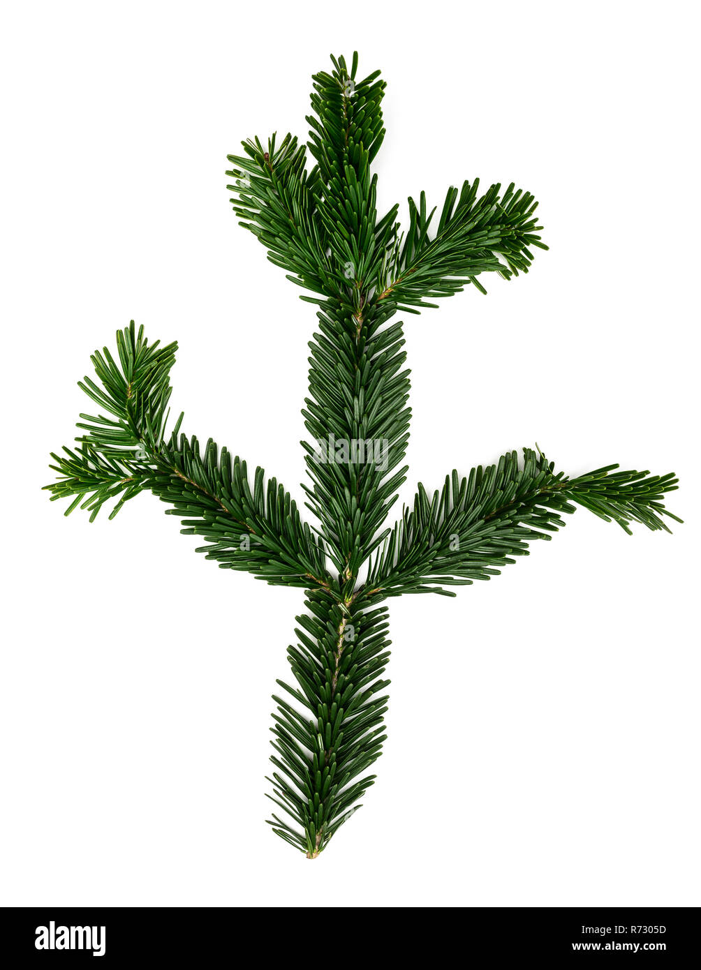 fir twig or branch isolated on white background - Stock Image