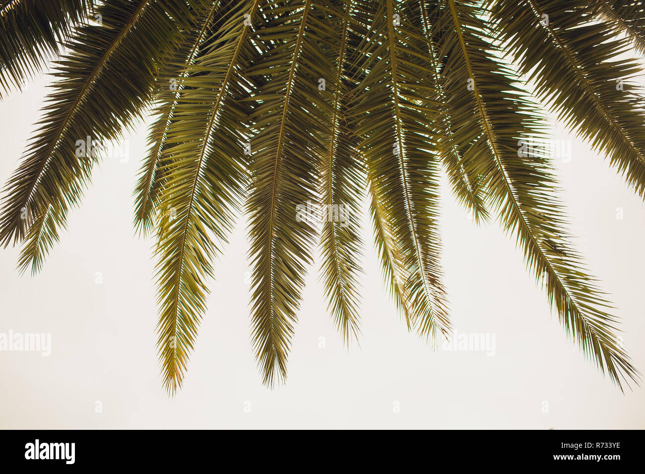 coconut tree at tropical coast,made with Vintage Tones,Warm tones - Stock Image