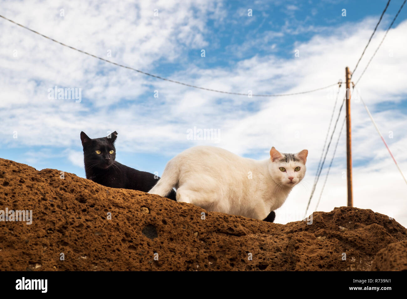 Two cats, one black, one white, looking suspiciously down from a sandy coloured rock in El Puertito, Costa Adeje, Tenerife, Canary Islands, Spain - Stock Image