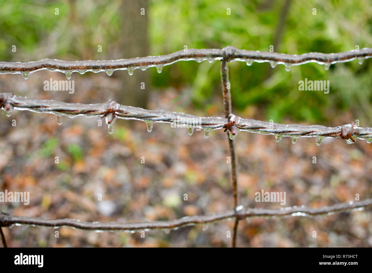 Rusty barbed wire completely coated in ice. Stock Photo