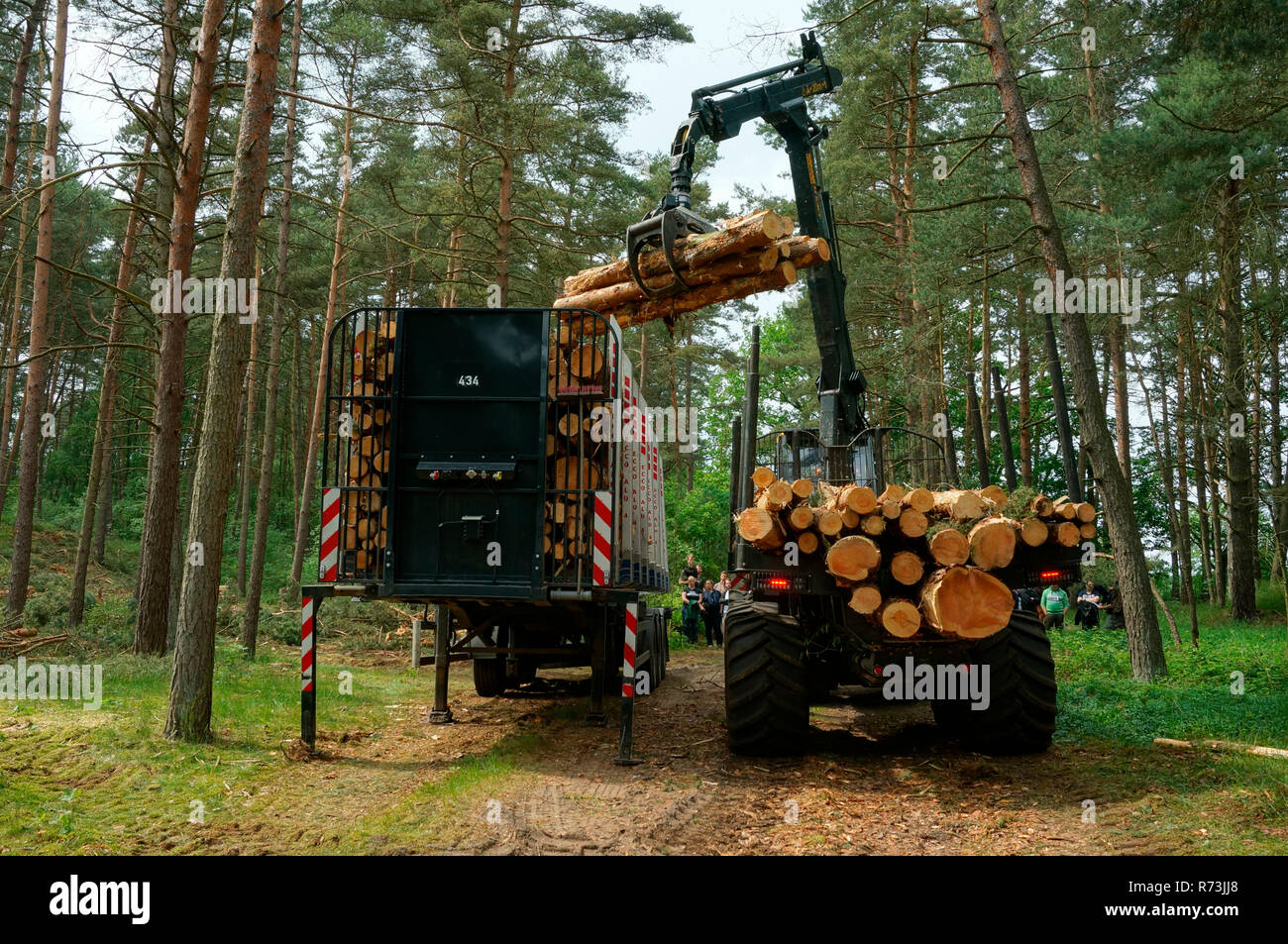 Forestry, forwarder, pine trunks,  (Pinus sylvestris), pine forest, forest technology, forest machinery, Sarenseck, Lower Saxony, Germany Stock Photo