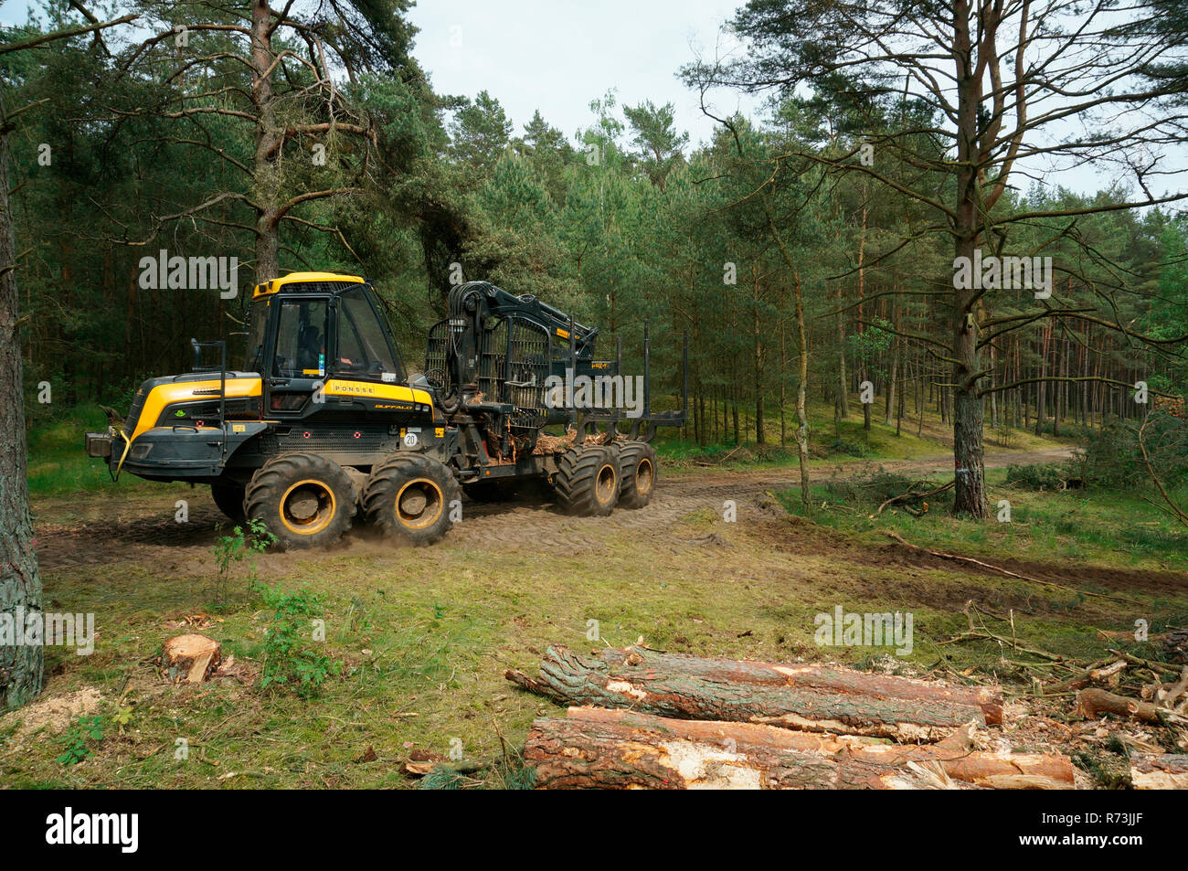 forestry, forwarder, Ponsse, pine, (Pinus sylvestris), pine forest, forest technology, forest machinery, Sarenseck, Lower Saxony, Germany Stock Photo