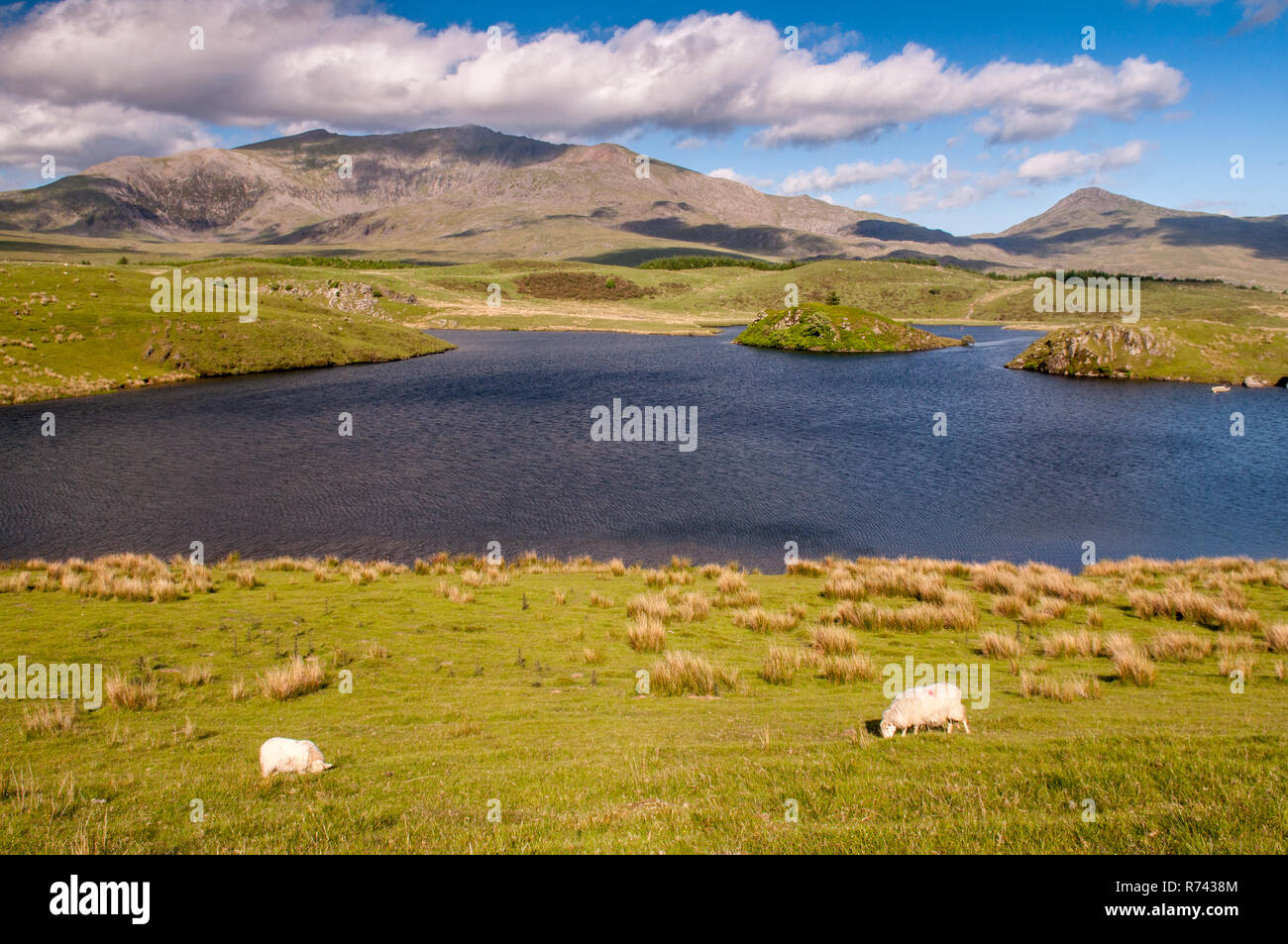 Snowdon mountain rises from the shores of Llyn y Dywarchen, a small lake ar Rhyd-Ddu in Snowdonia National Park, North Wales. Stock Photo