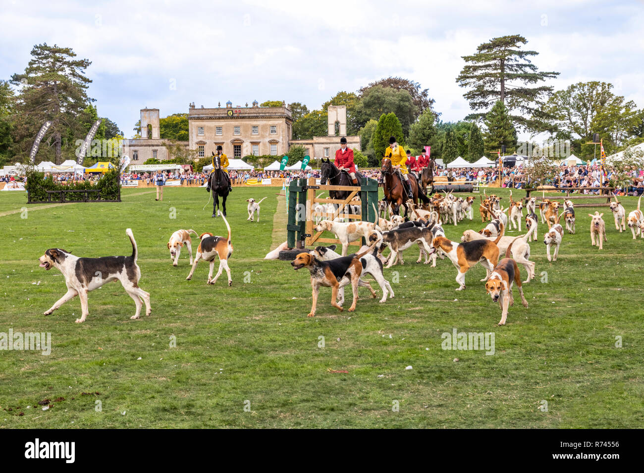 Mass Parade of Hounds at the 2018 Frampton Country Fair held at  Frampton Court, Frampton on Severn, Gloucestershire UK Stock Photo