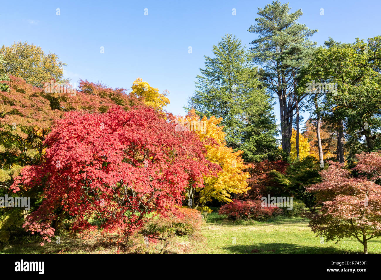 Autumn colours at Westonbirt Arboretum, Gloucestershire UK - Stock Image