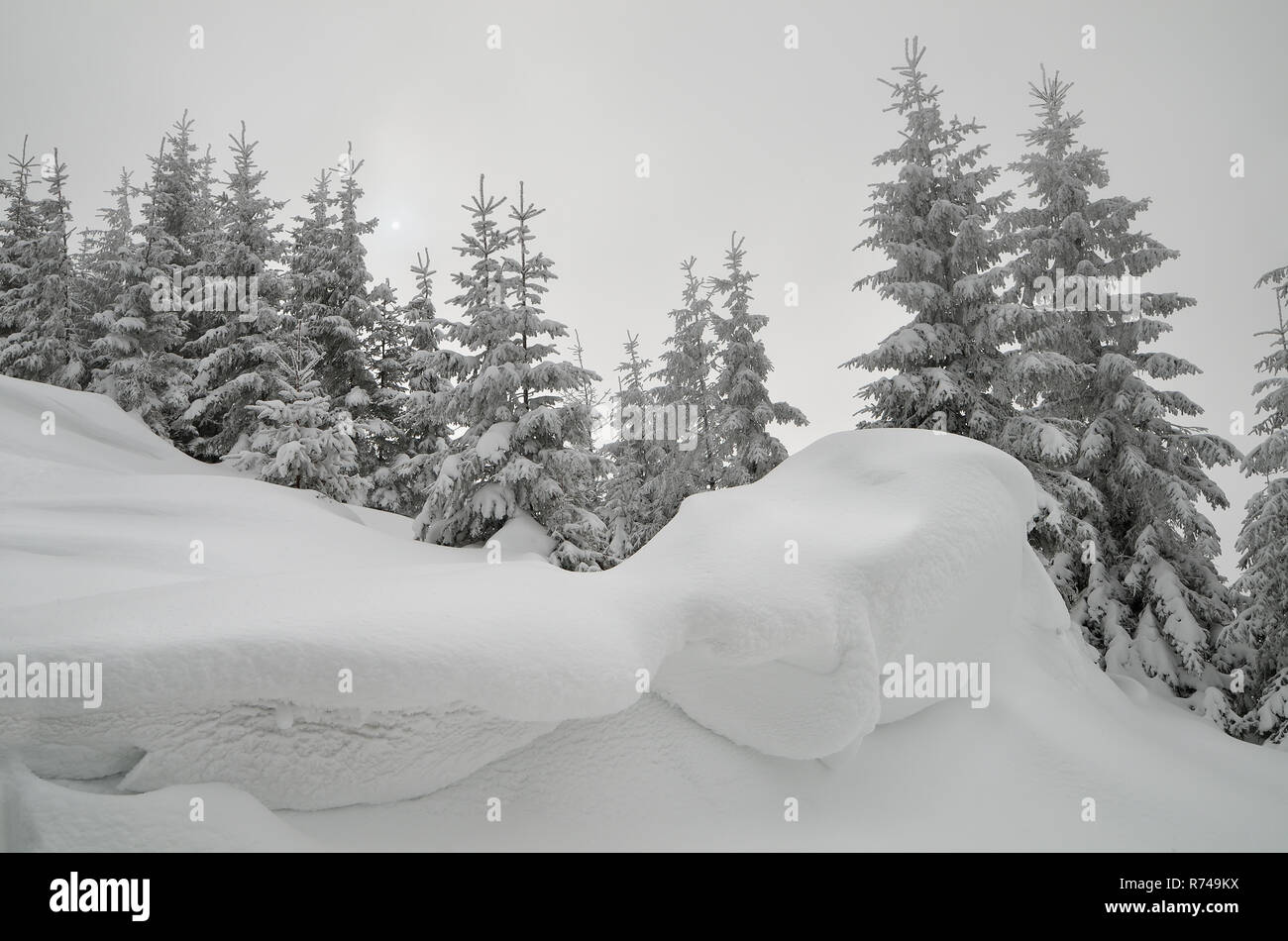 Christmas view. Snow-covered forest in the mountains. Landscape in gray tones overcast day. The sun shines through the clouds. Carpathians, Ukraine, E - Stock Image