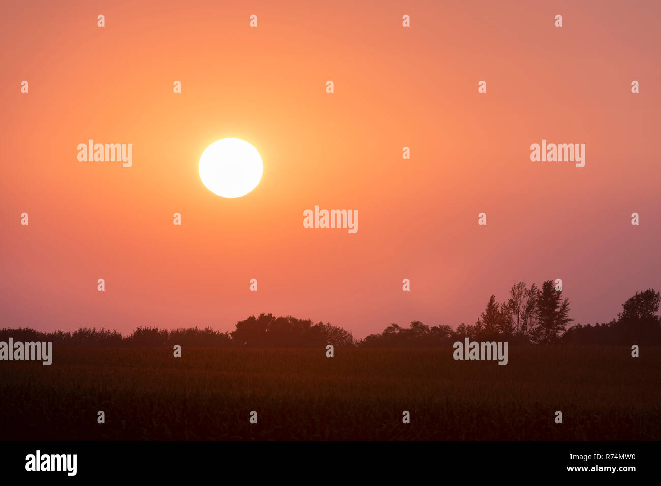 Sunset, farmland, late Summer, Dakota County, MN, USA, by Dominique Braud/Dembinsky Photo Assoc - Stock Image