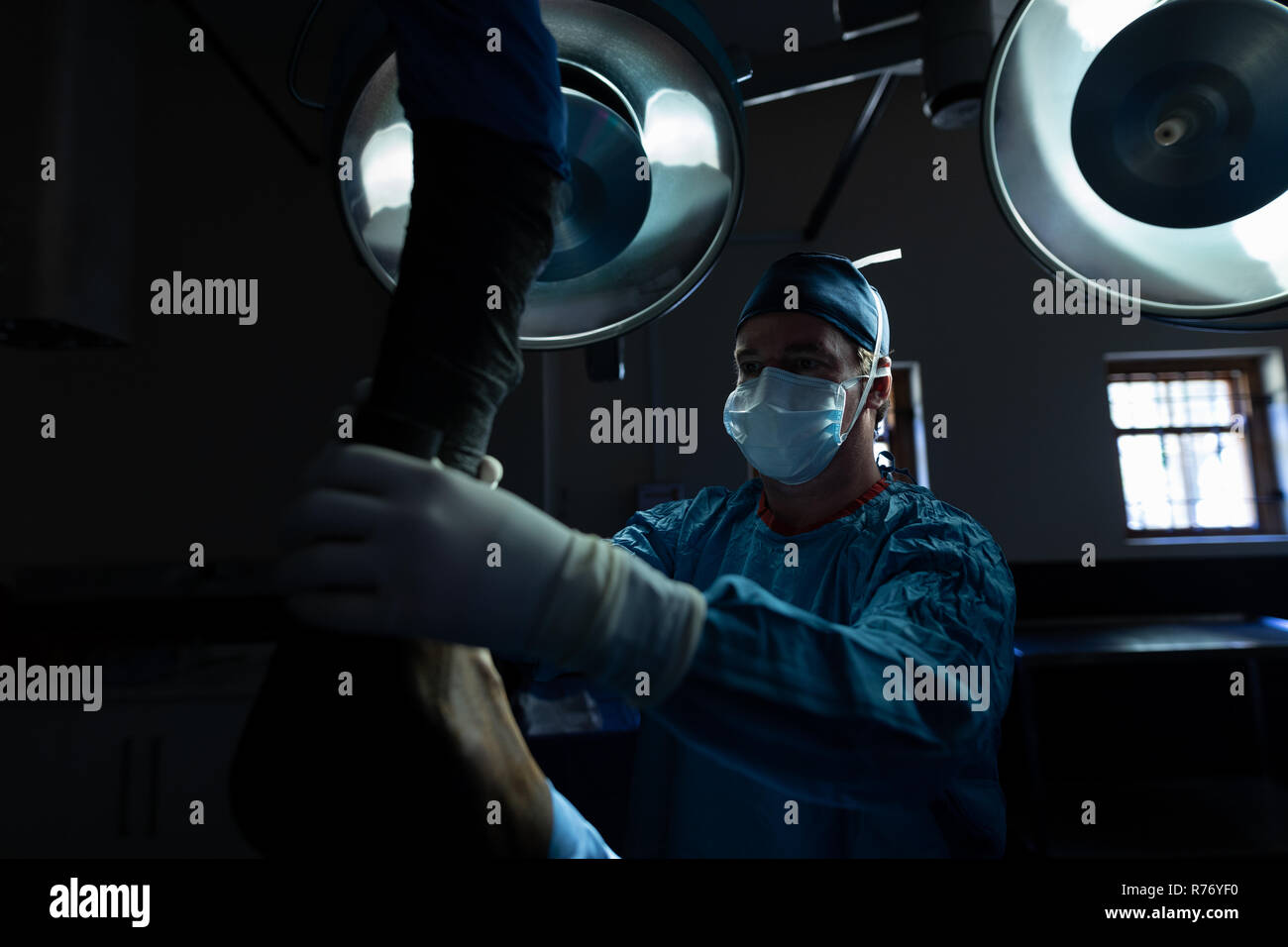 Surgeon operating a horse in operation theatre - Stock Image