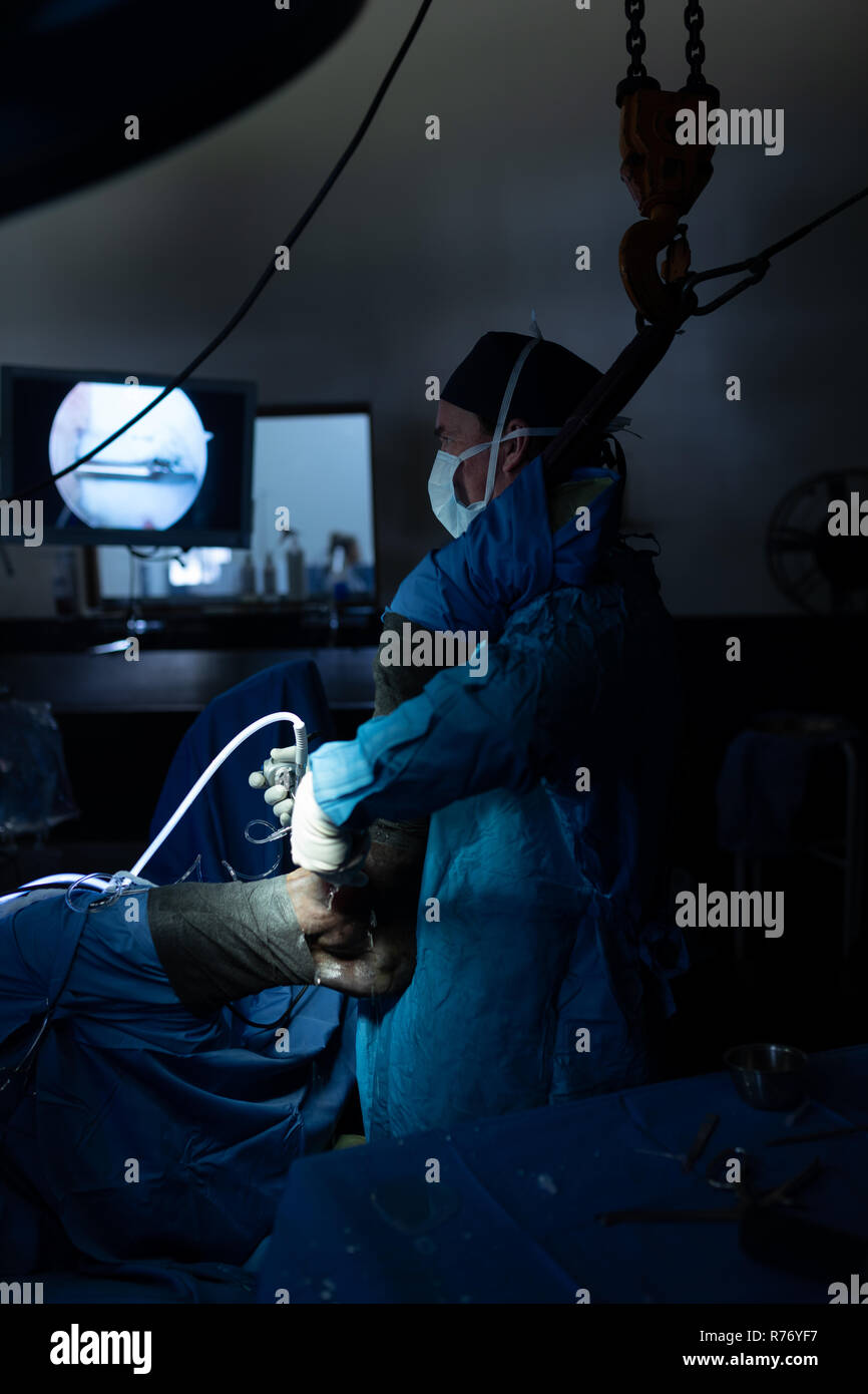 Surgeon examining a horse in operation theatre - Stock Image